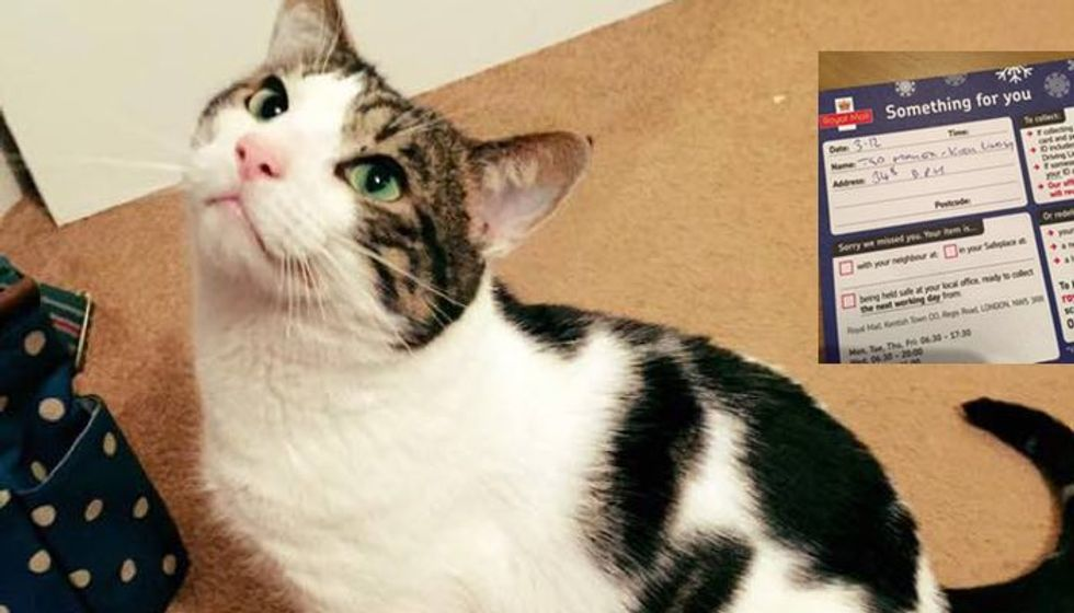 Cat is Denied His Christmas Gift by Post Office Because He Doesn't Have ID