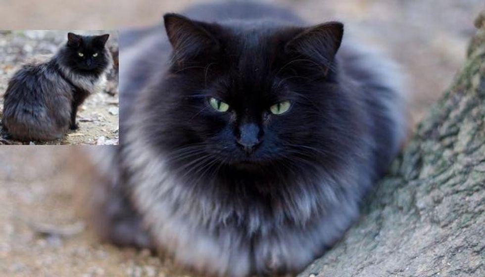Magnificent Black Cat Grows Silver Winter Coat