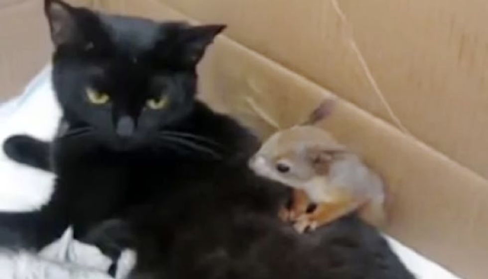 Cat Mama Adopts Very Playful Baby Squirrel Who Just Can't Stop