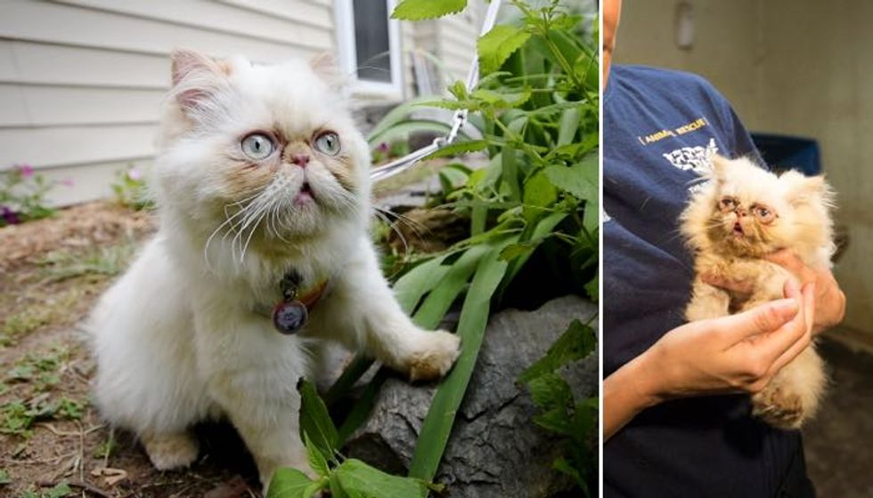 Scraggly Rescue Kitten Conquers Her Puppy Mill Past