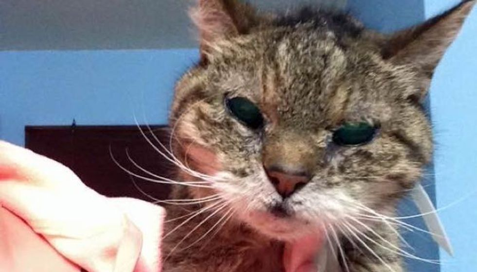 25 Year Old Cat Turned Up in Shelter, a Young Woman Knows She Has to Save Her!