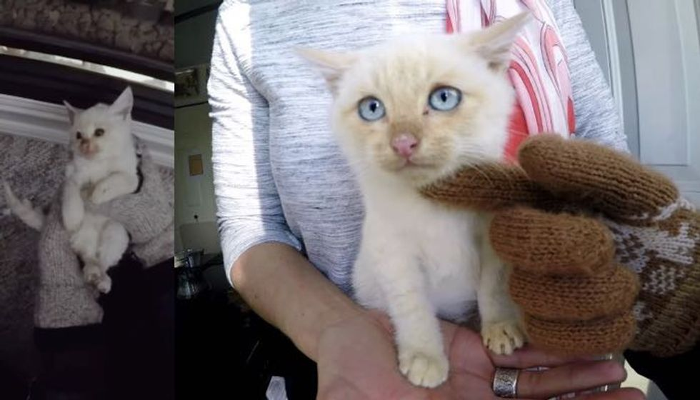 UPDATES: Frozen Kitty Saved from Freezing Snow Now Thriving!
