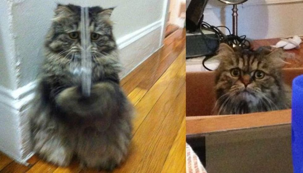 He May Look Worried, but this Rescue Cat is Just Loving His New Life