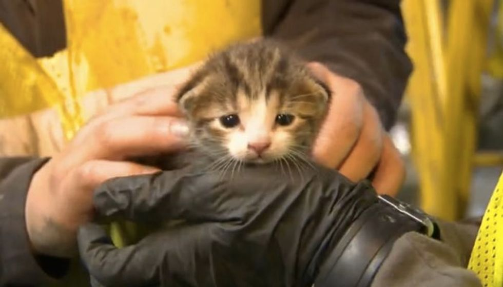 Kitten Saved from Conveyer Belt at Recycling Center Seconds Away from Death