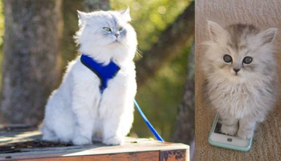 Rescue Cat Now Gets to Do What He Loves and Shares His Adventures