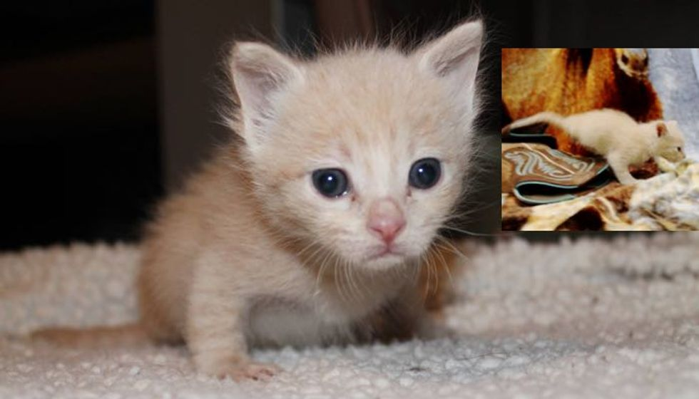 Orphaned Kitty Born with 2 Legs Wants to Live!