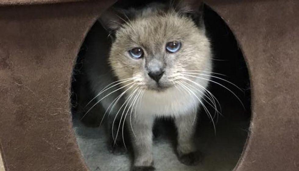 Abandoned Cat With Sad Eyes Showed Up on Doorstep, Begging for Warmth