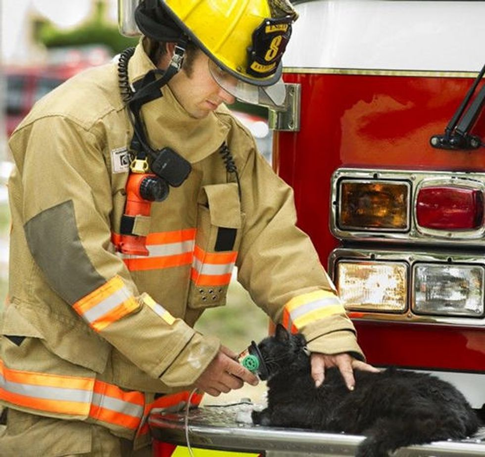 Three Cats Saved By Firefighters From House Fire