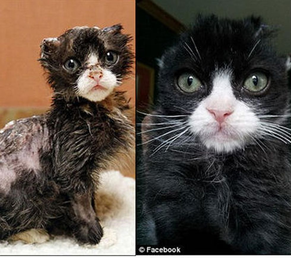 Burned Kitten Justin Fights His Way Back To Health