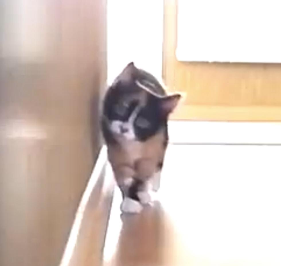 Ninja Kitten Attack