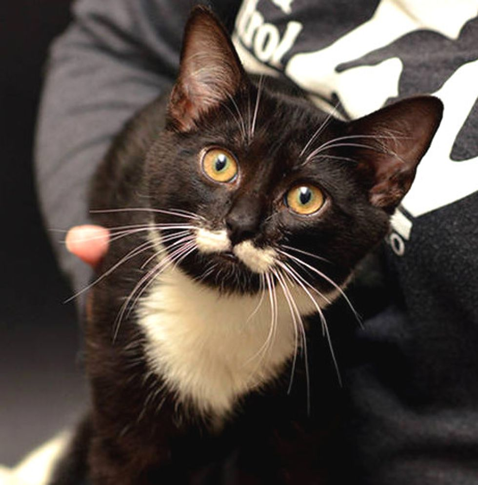 Shelter Cat With Cute Mustache And Extra Toes