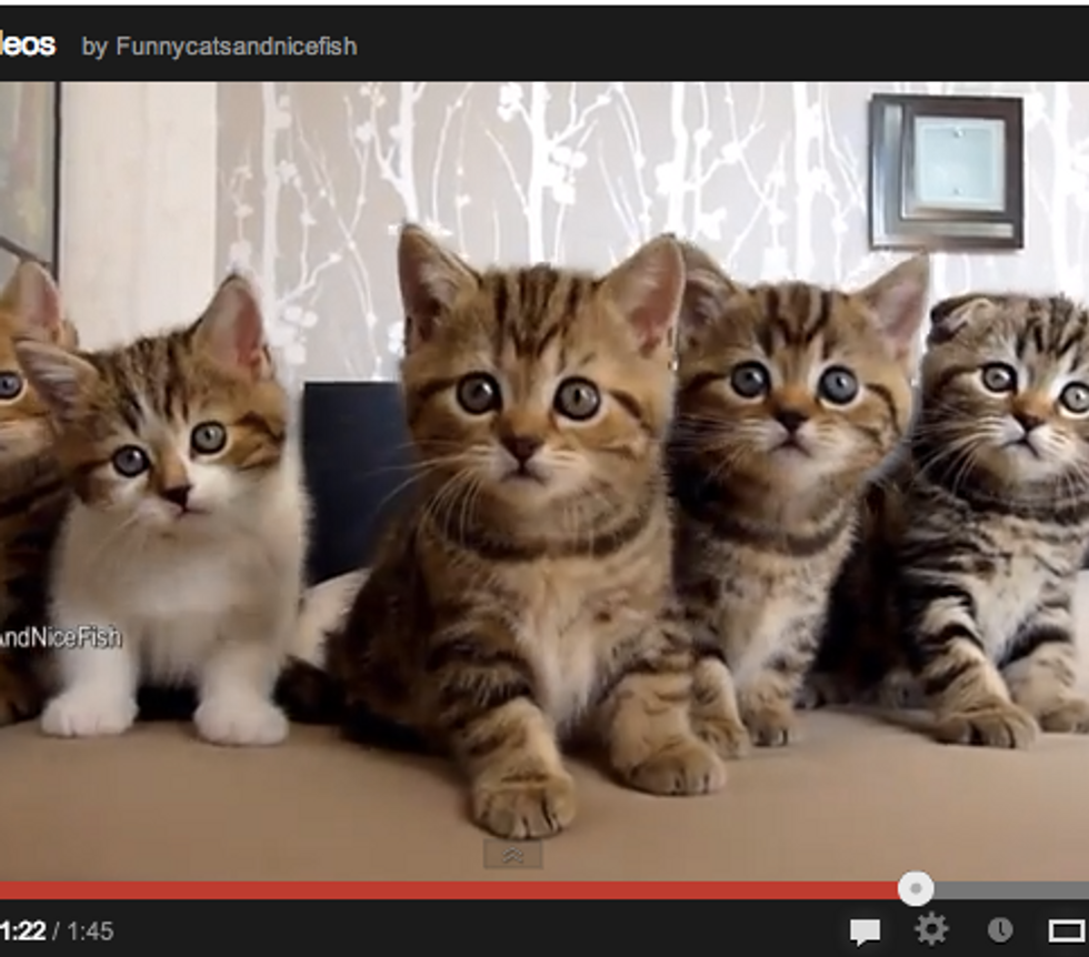 Best Funny Moments of Five Furry Kitties