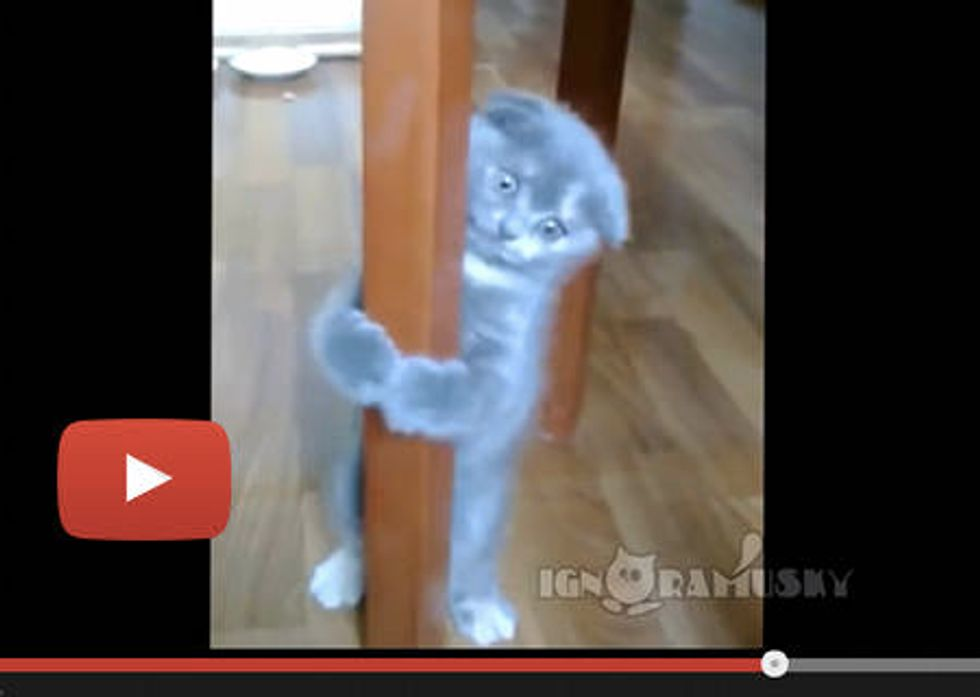 Look I Can Jump!