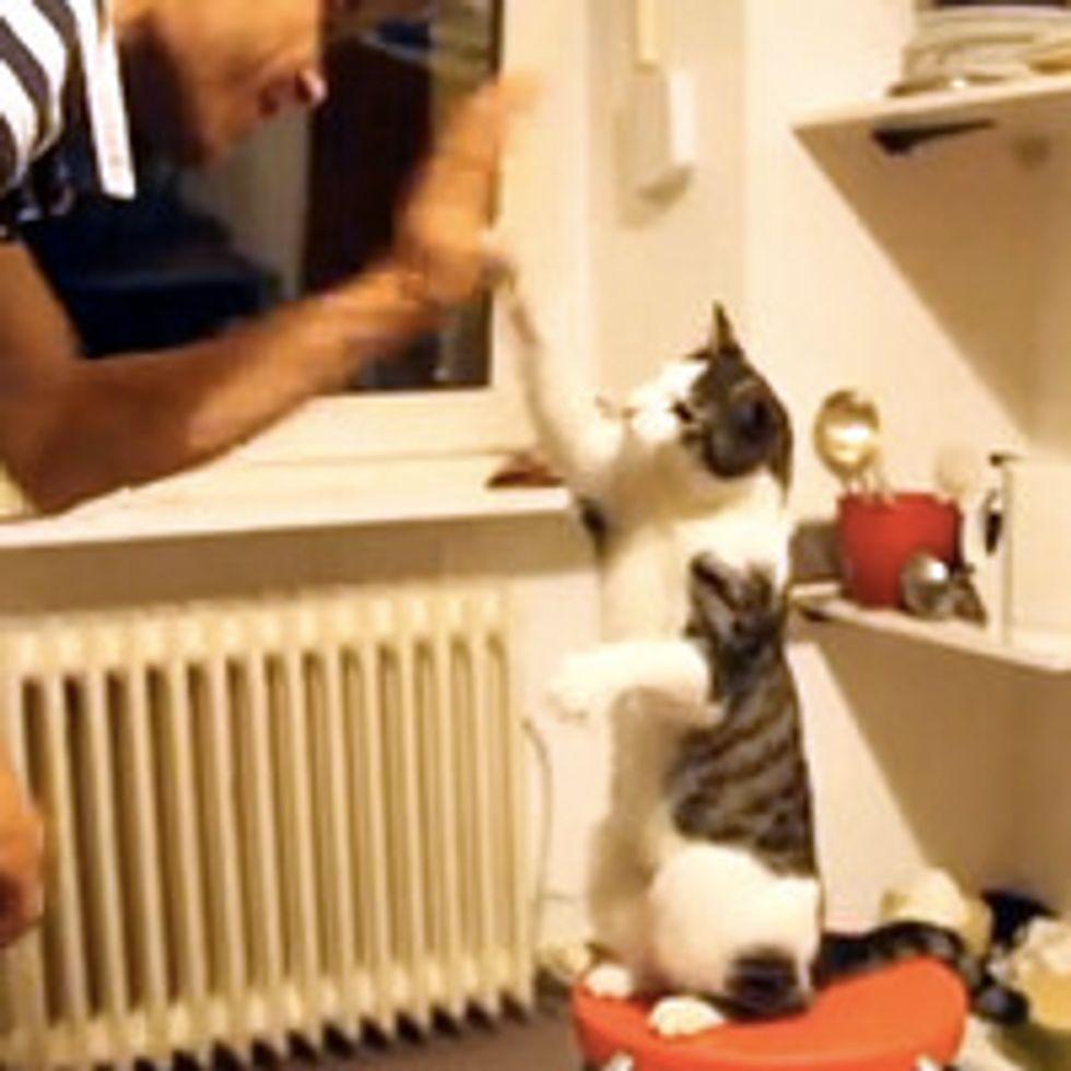 Cool Cat High Five!
