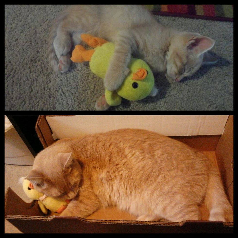 18 Months Later He Still Sleeps With His Toy