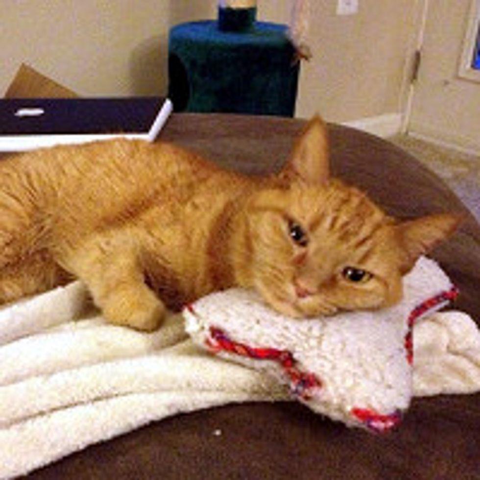 11 Year Old Cat Still Carries Her Bone Around House