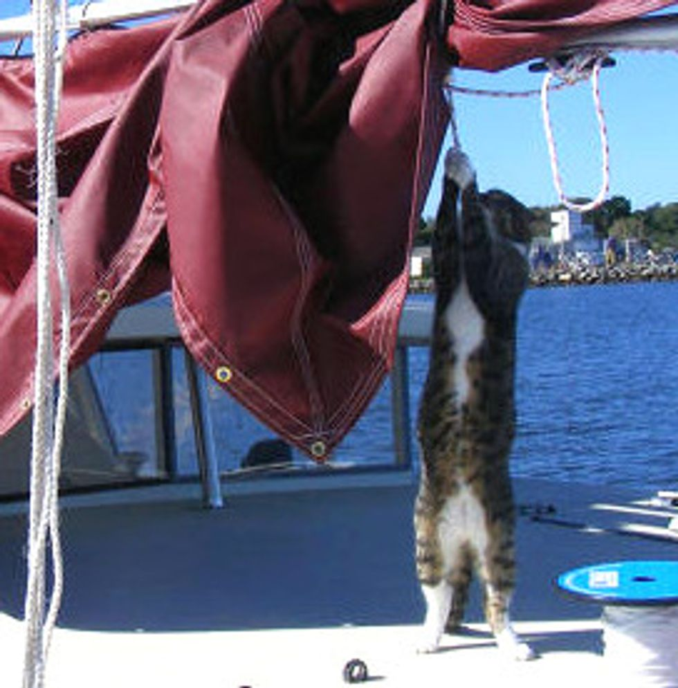 Camber The Boat Cat