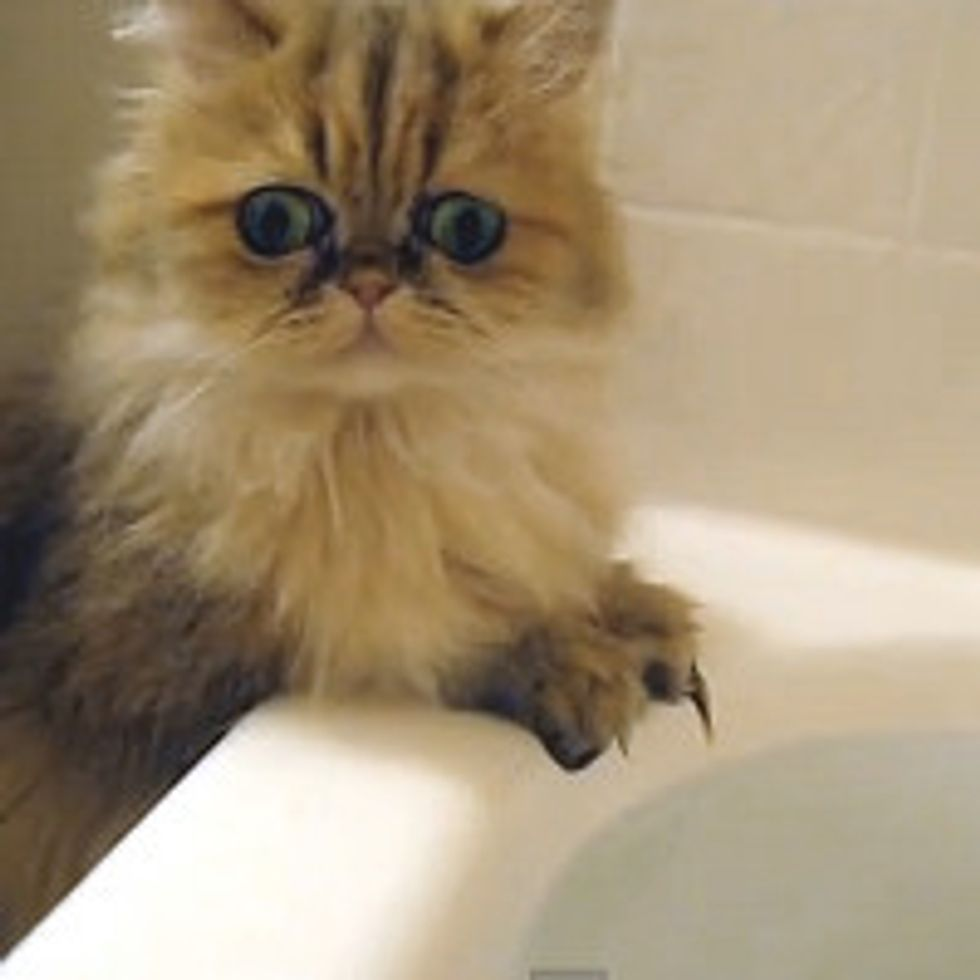 Kitty's Exploration Of Bathwater