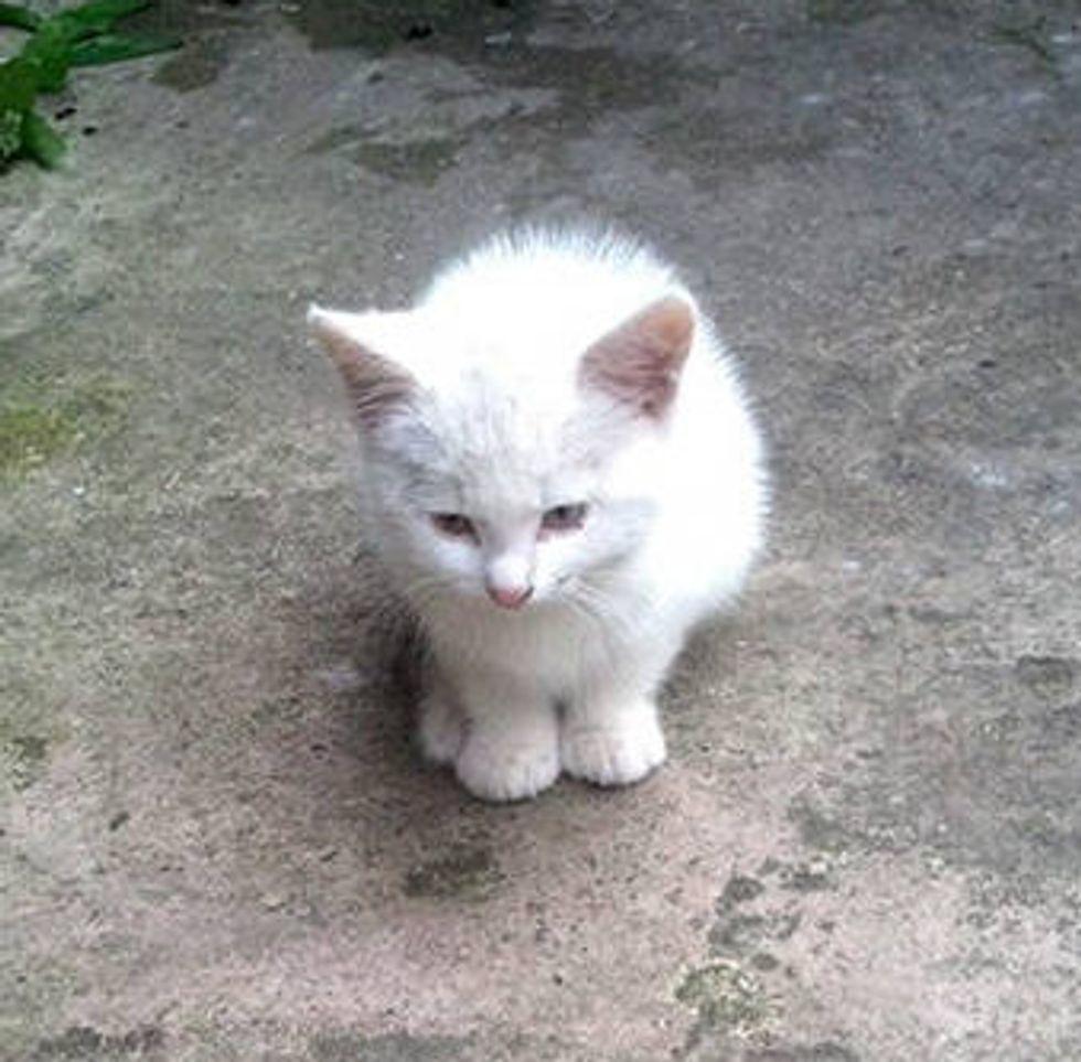 Tiny Homeless Kitten