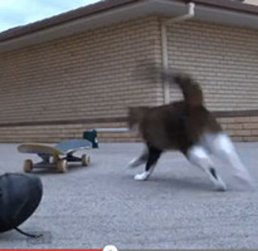 Cat Saves Skateboard Jump With A Twist