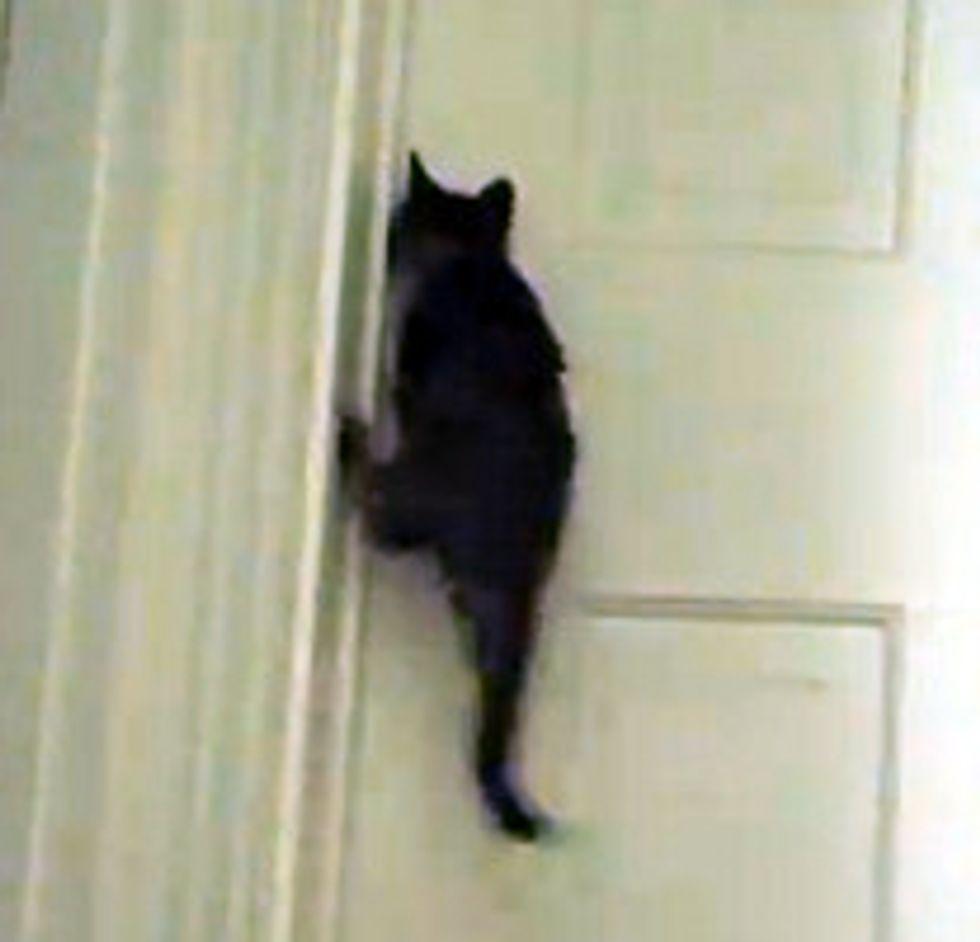 Tiny Kitten Opens Bedroom Door