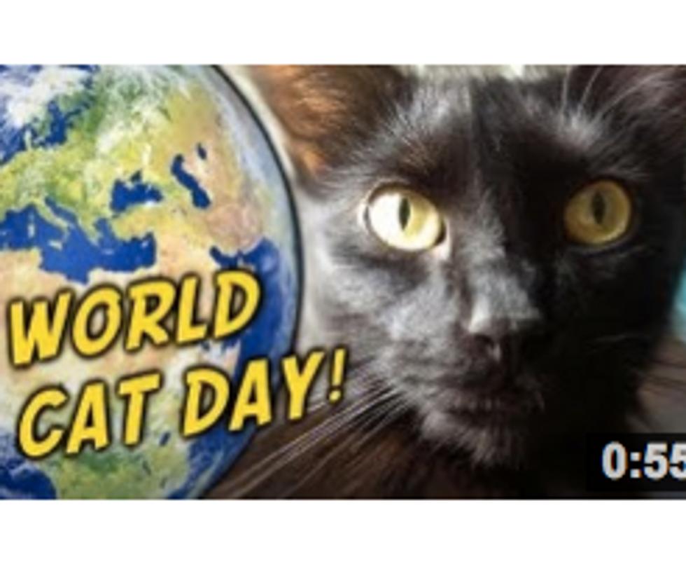 World Cat Day!