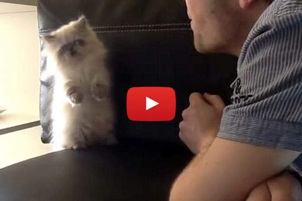 Cute Kitten Fights Air