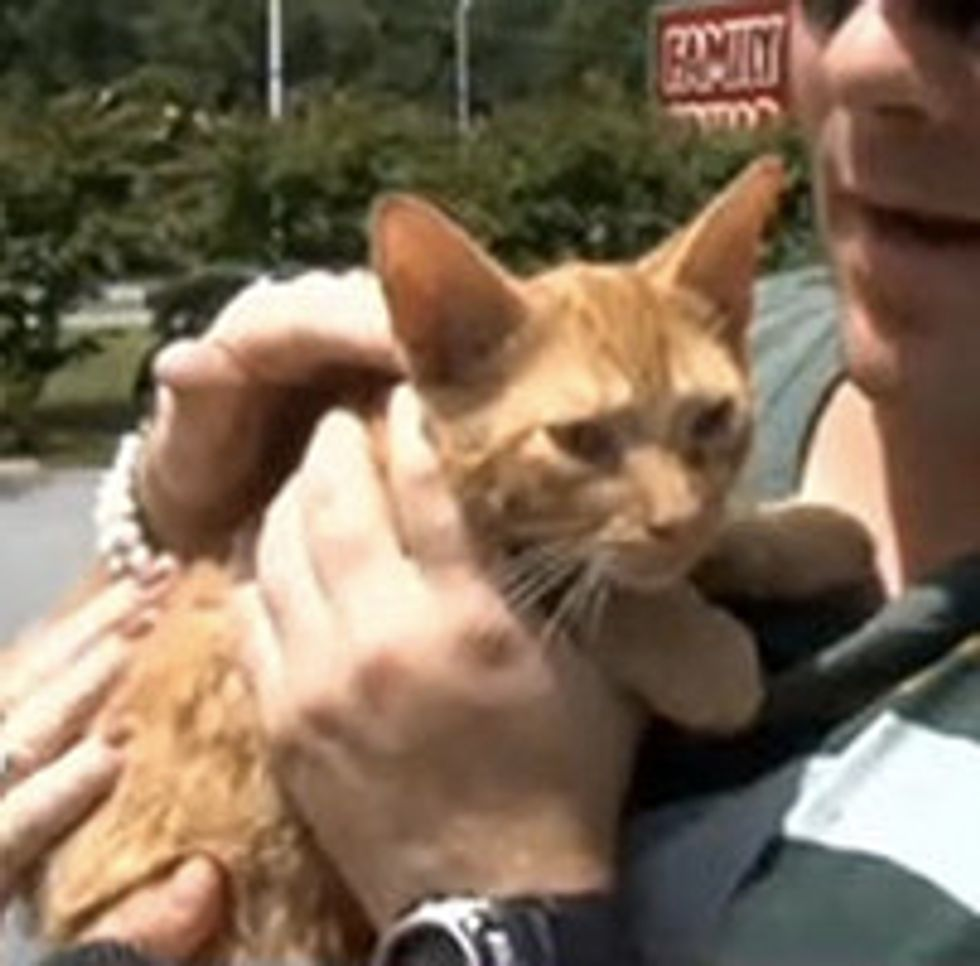 Ginger Kitten Trapped Inside Bucket Of Paint In Dumpster Is Rescued!