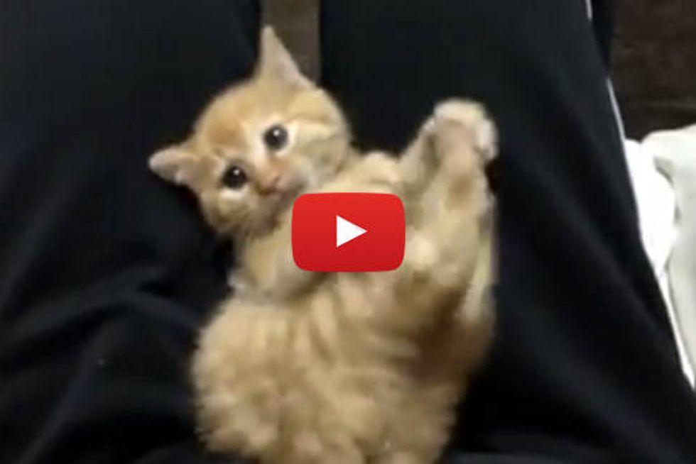 Cute Kitten Gets Tickled