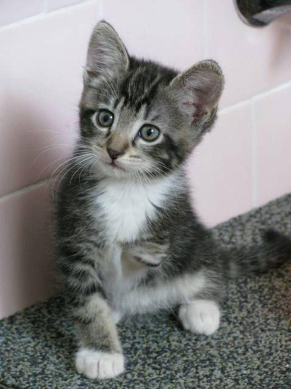 Tripod Kitten Born With Three Legs