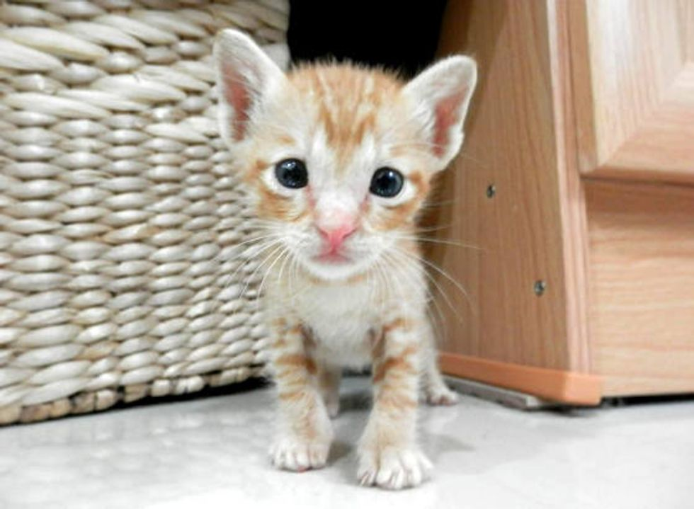 Kitten Found In School Playground Got A Second Chance At Life: Then & Now