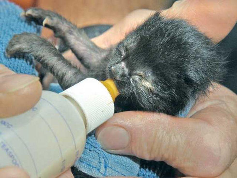 Santa Clarita Man Saves & Cares For 6 Newborn Kittens