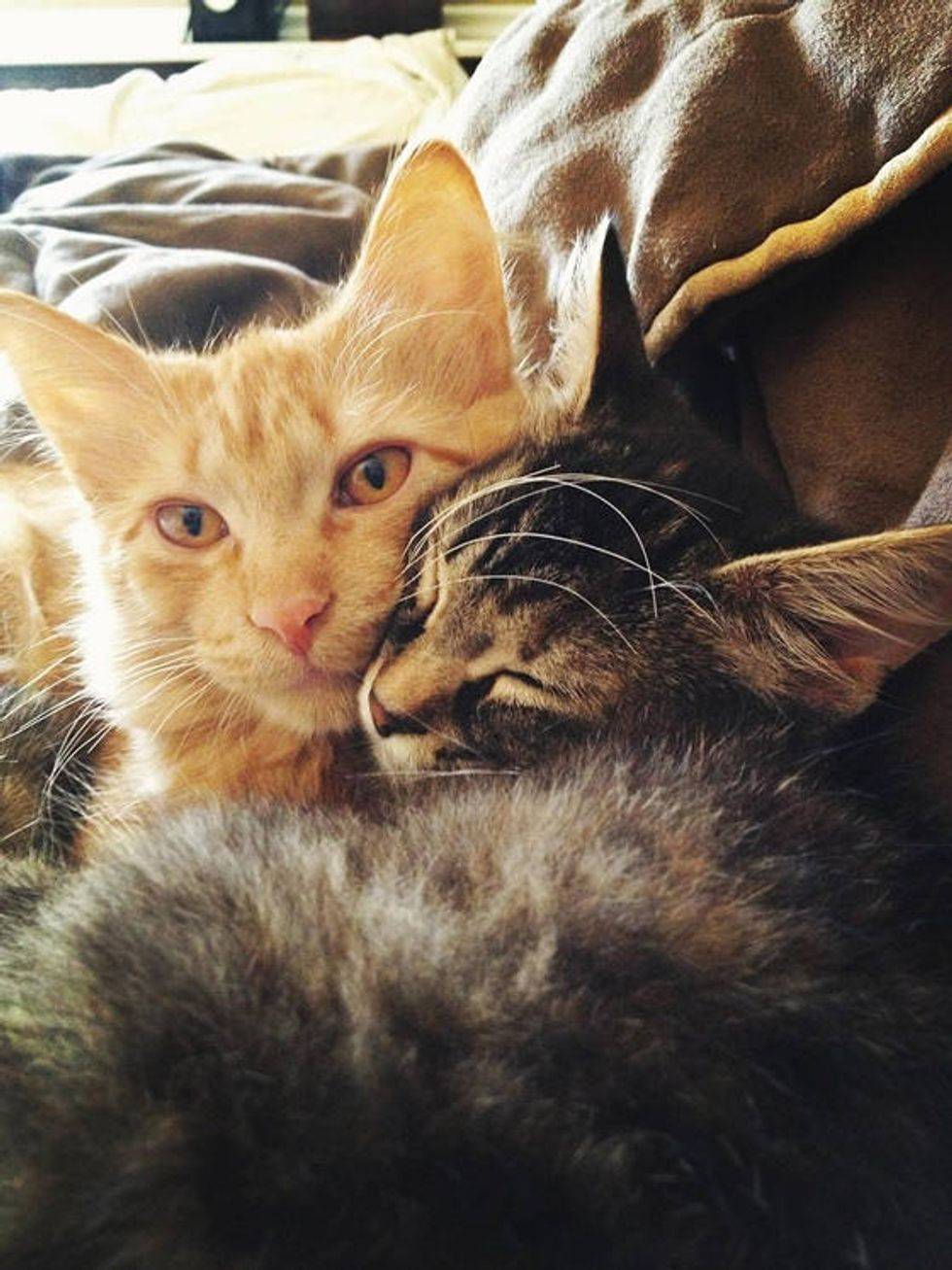 Cat Cagemates: Adopted Together