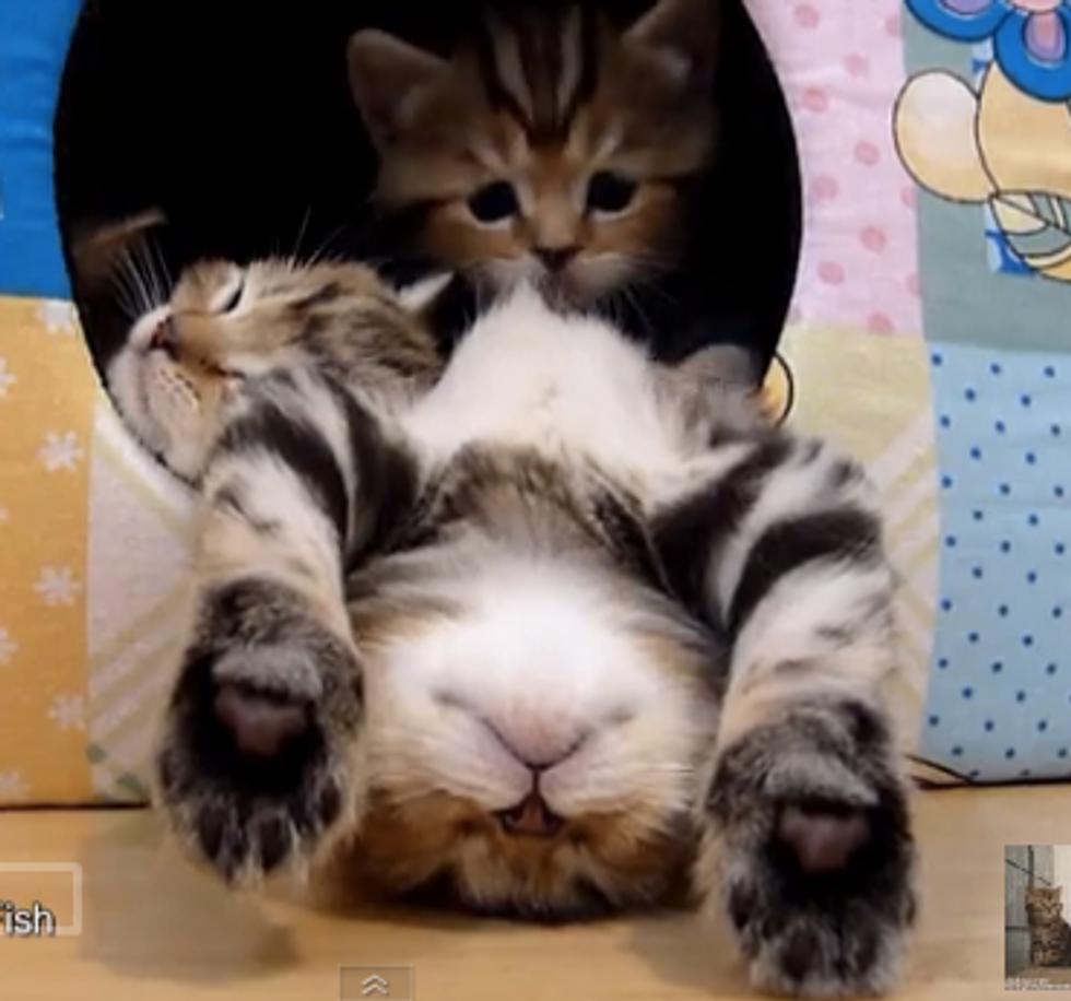 Very Polite Kitten