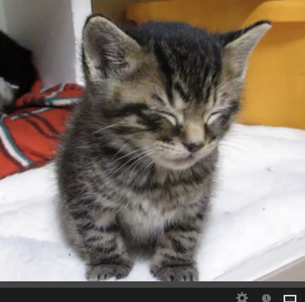 Very Sleepy Kitten