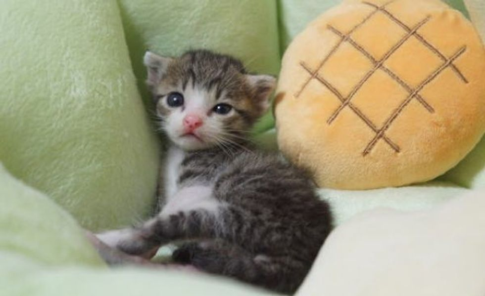 This is Heart Warming! A Rescue Kitten's Journey to Happiness!