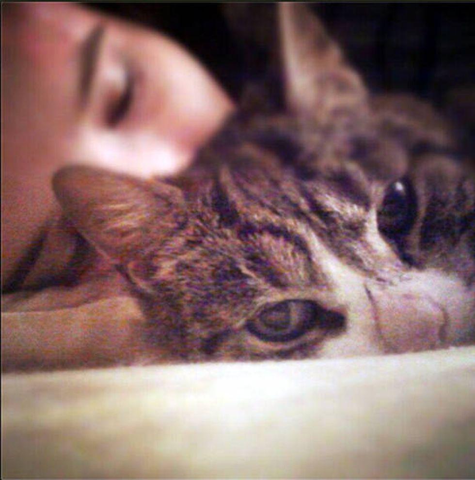 """This is Nova, the cat sent to change my destiny"""