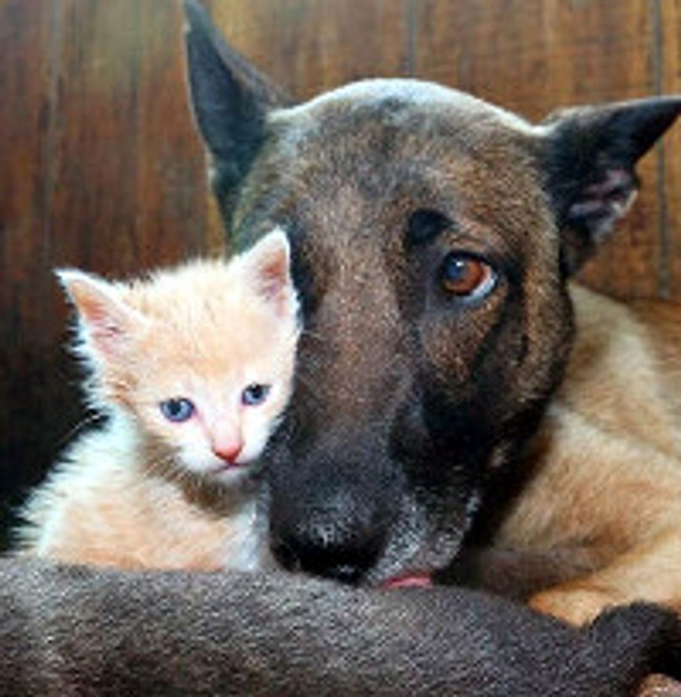 Farm Dog Adopts Baby Kitten