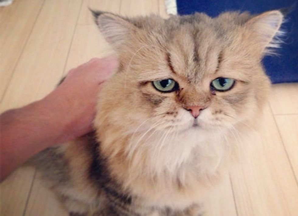 The Cat Who Looks Like He's Permanently Disappointed In You