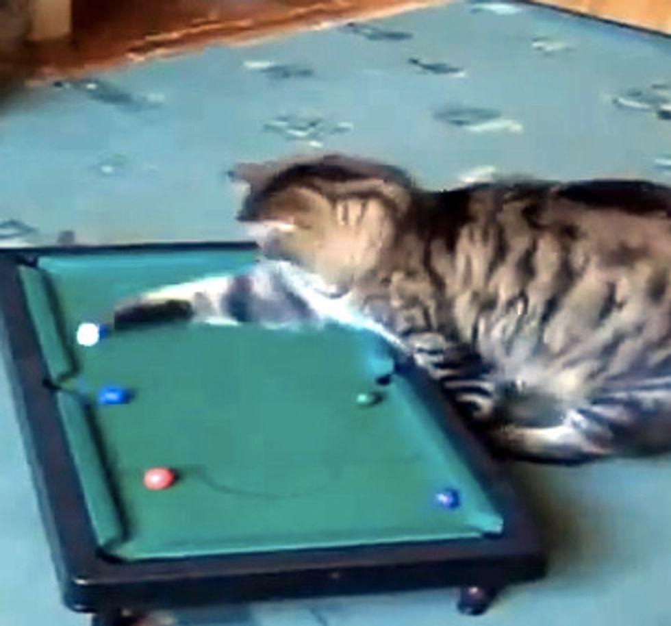 Kitty Plays Pool