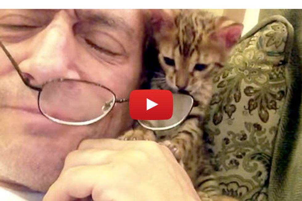 Kitten Needs My Glasses