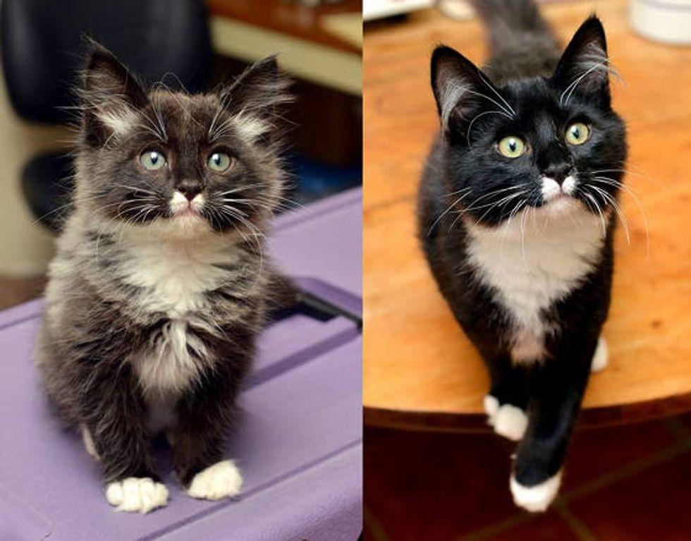 Ashton The Kitten Found Under Car: Then & Now