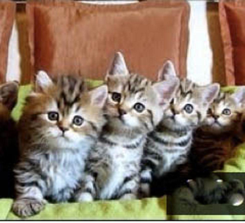 Kitten Dance Crew