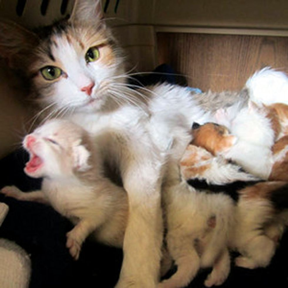 Stray Cat Mama Brings Surprise