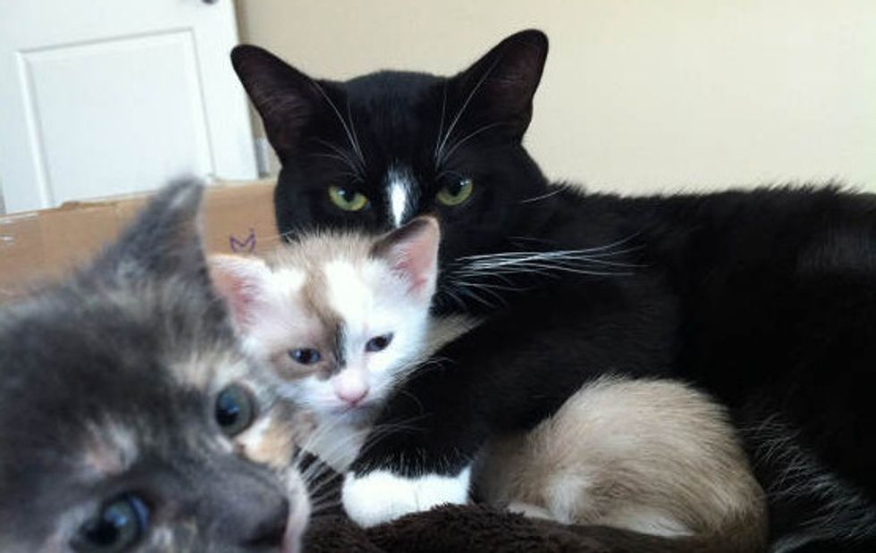 Protective Father Cat