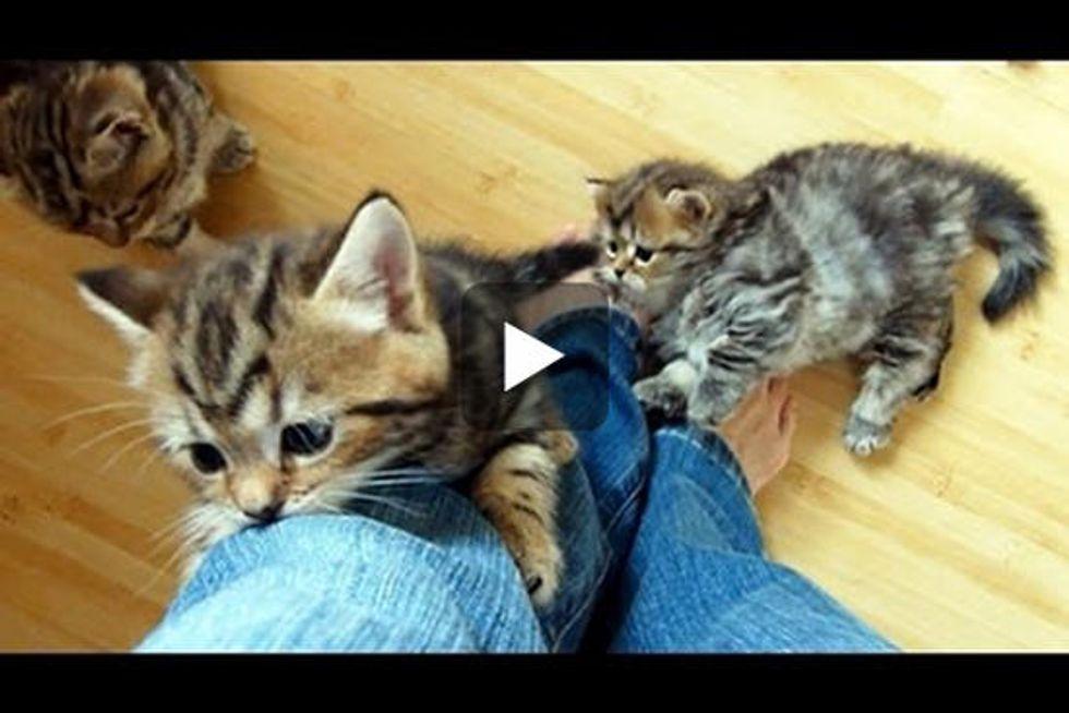 Kittens Climbing Legs