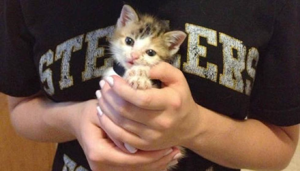 Harley the Rescue Feral Kitten Found Outside a House, Then and Now