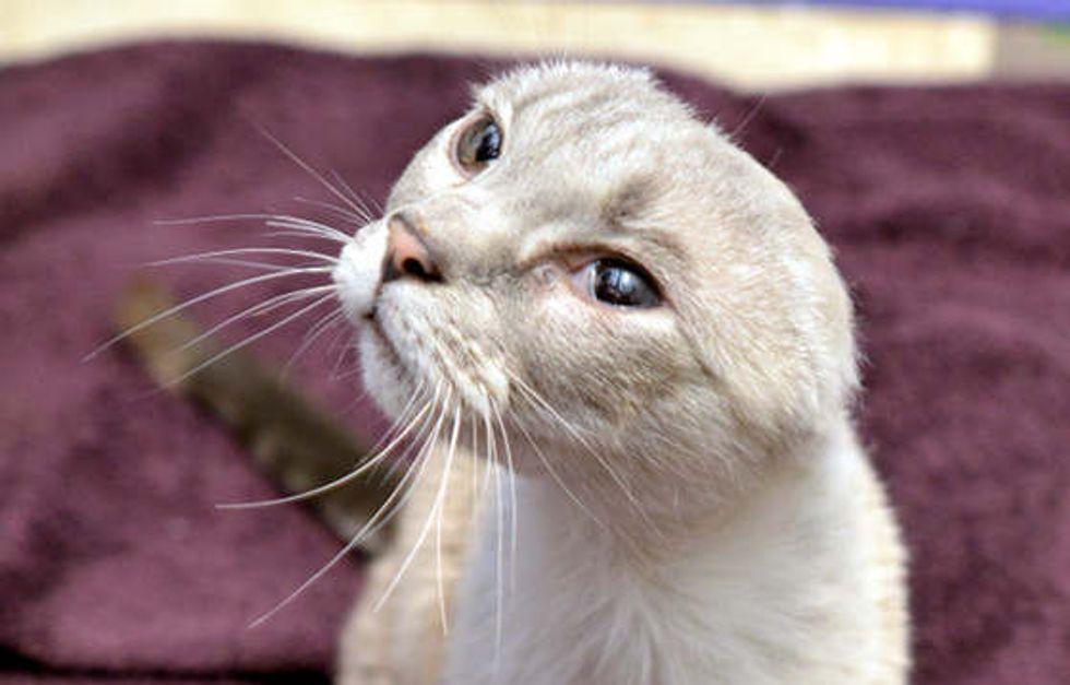 Carmen The Earless Cat