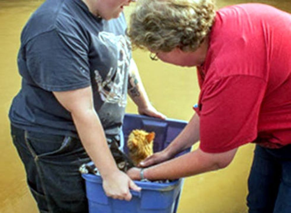 Colorado Flood Rescue Cats Reunited With Family