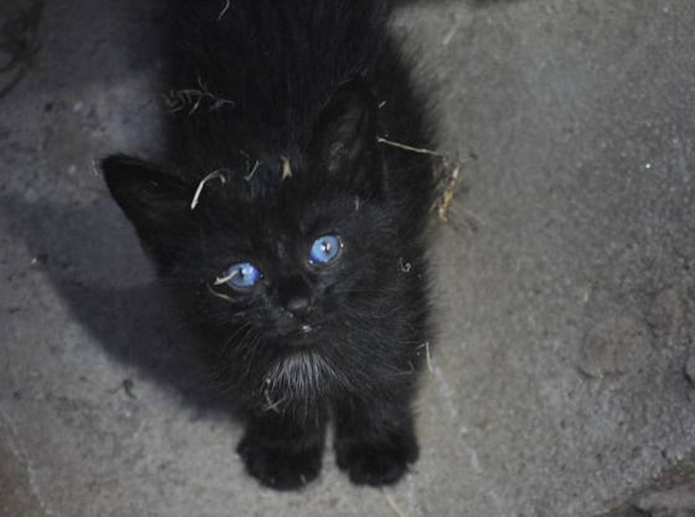 Puddles The Cat Saved From Storm Drain